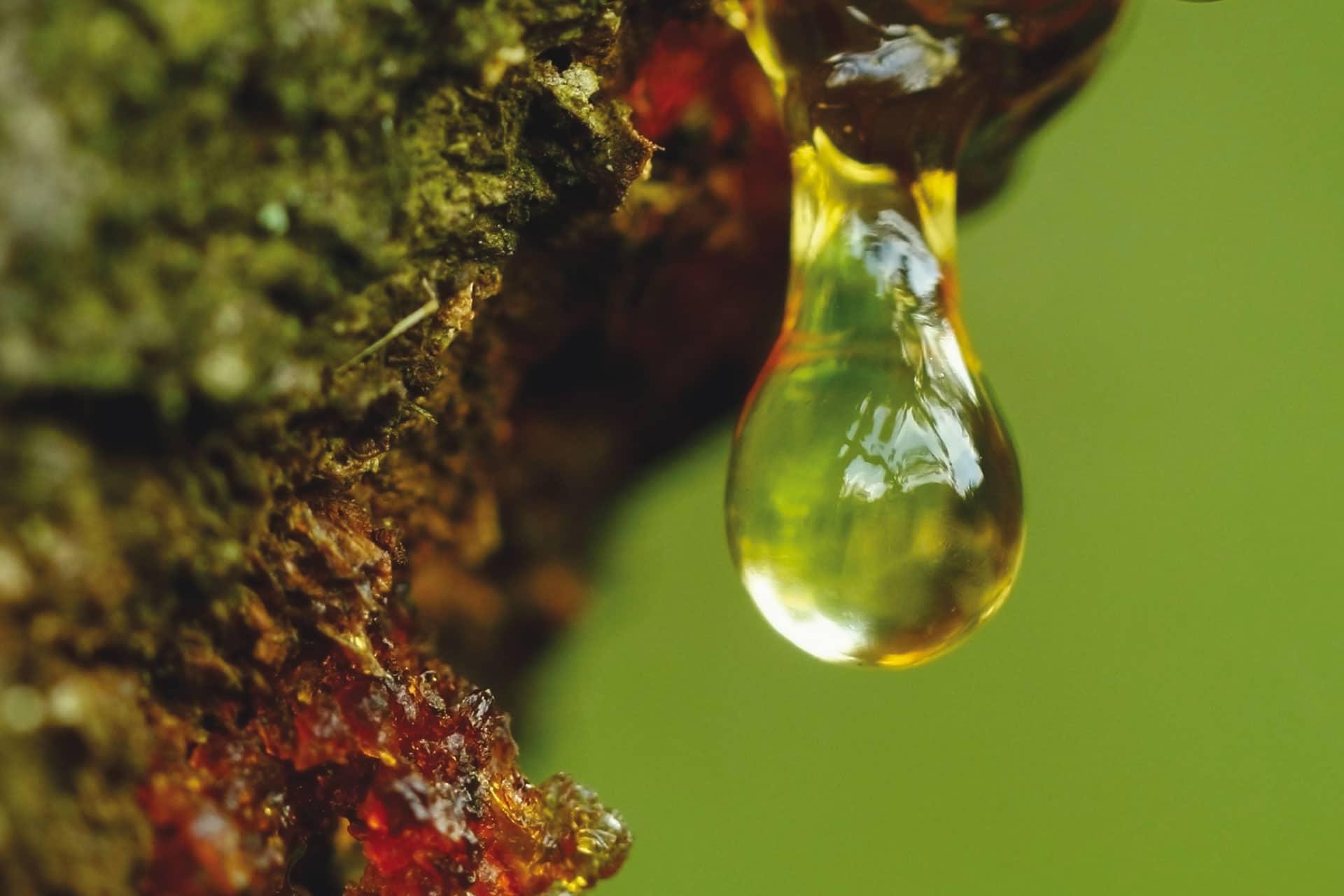 DRT poursuit la promotion de son produit leader dans l'industrie des boissons